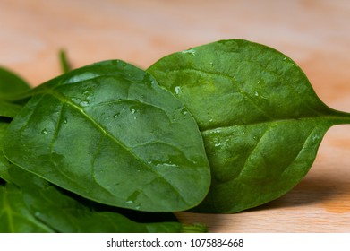 fresh green Spinach leaves with water drops on it
