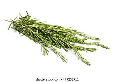 Fresh green sprig of rosemary