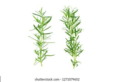 Fresh green sprig of rosemary isolated on a white background 2 stems
