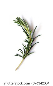 Fresh green sprig of rosemary on a white background