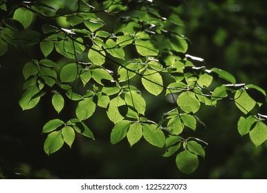 Fresh green of spring