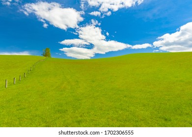 Fresh green spring field in the New Zealand with a blue sky