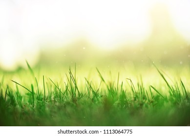 Fresh green spring grass with sun leaks effect, copy space. Soft Focus. Abstract nature background. Banner.