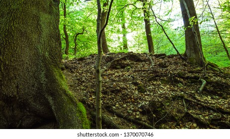 Fresh green spring-like forest, and the forest floor
