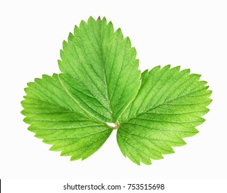 Fresh green strawberry leaf isolated on white background with clipping path