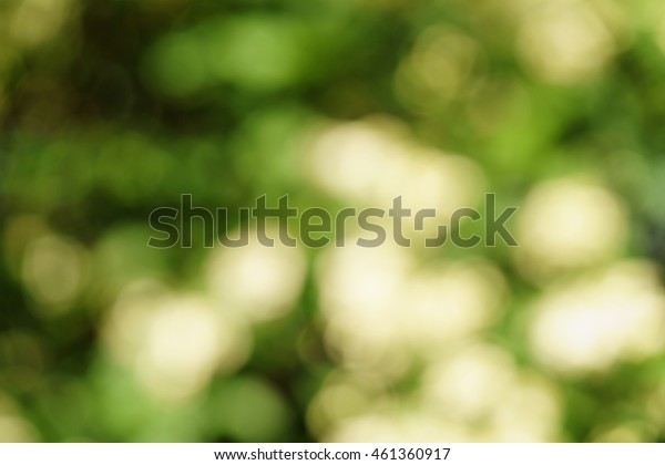 fresh green summer blur background