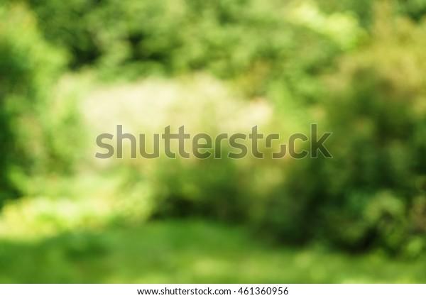 fresh green summer blur background