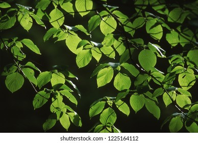 Fresh green and sunbeams