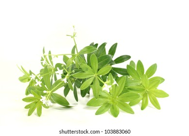 fresh green sweet woodruff with flowers on a bright background