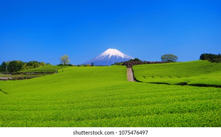 "Fresh green tea field of ""Imamiya"" in Fuji City and Mt. Fuji with blue sky 04/20/2018"