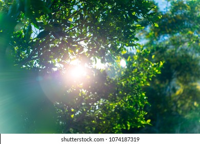Fresh green tree foliage, the sun breaks through the lush leaves of a tree, abstract natural background, freshness of spring or summer nature