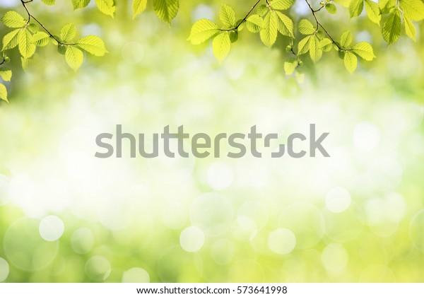 Fresh green tree leaves, frame. Natural background.