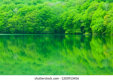 Fresh green tree reflected in water