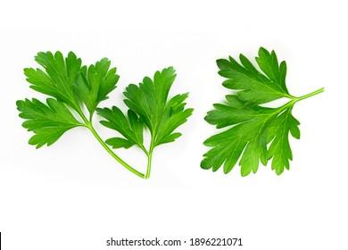 Fresh green vegan vitamin parsley isolated on white background