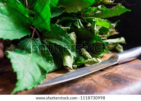 fresh green vegetable spinach pumpkin leaves or Nigerian Ugwu on vintage wooden chopping board with knife isolated on dark background for rustic cooking concept for local Market