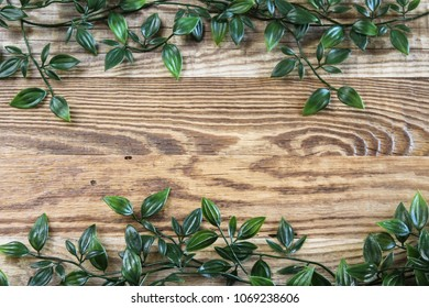 Fresh green vine with many little leaves on retro wooden background, rustic pattern, concept of spring, copy space for your text