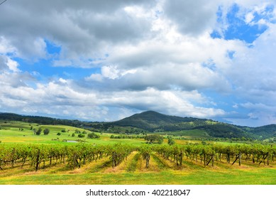 Fresh green vineyards near mountains, cloudy sky above. Hunter Valley, Australia