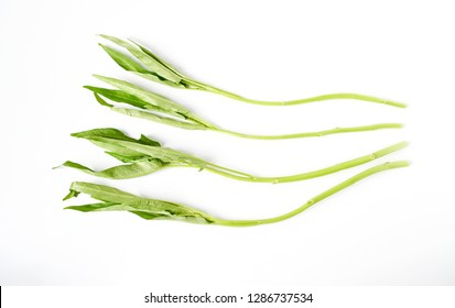 Fresh  green water spinach , chinese spinach or morning glory  vegtable on isolate white background vegetable full with vitamin and nutrition mostly special menu in asia kitchen.