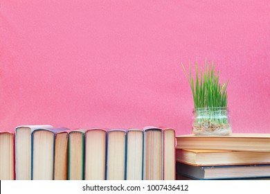 Fresh green wheat sprouts in glass jar on books at pink background. Agriculture education concept. Copy space