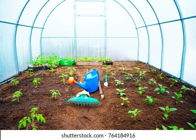 Fresh green young seedlings of sweet pepper plants and tomatoes in a brown soil in greenhouse with a blue garden watering can, small garden shovel, raker. There is room for text