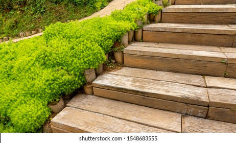 Fresh greenery foliage of needle-like leaves of Sedum angelina plant or stonecrop ground cover plant spreading beside the wooden stair
