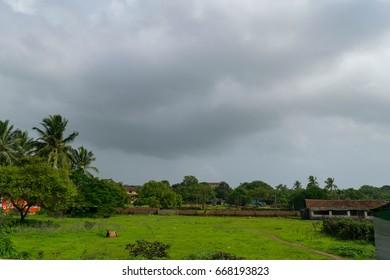 Fresh greens at Goa in Monsoon season