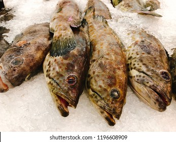 Fresh grouper fish in the market