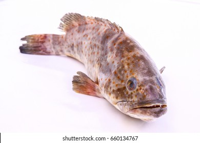 Fresh Grouper fish from sea