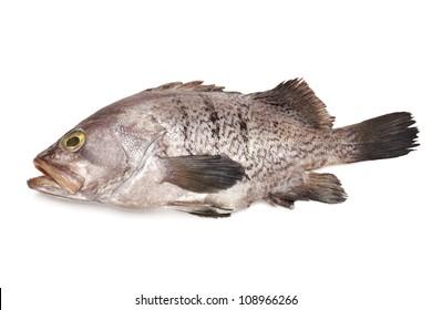 Fresh Grouper on white background