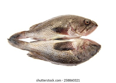 Fresh grouper in a white background