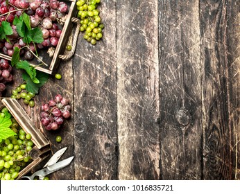 fresh harvest of grapes in boxes. On a wooden background.