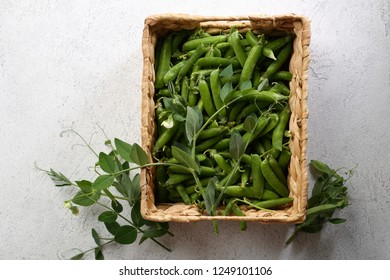 Fresh harvest of green peas pod