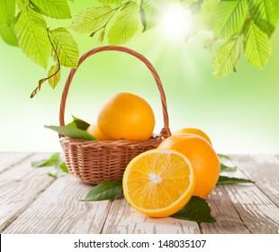Fresh harvested oranges in basket