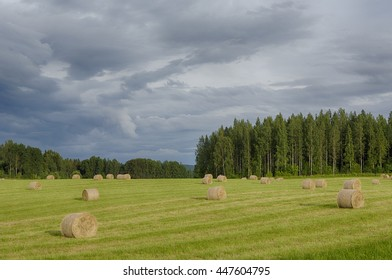 Fresh hay bales in the field. A storm is rising from the background.