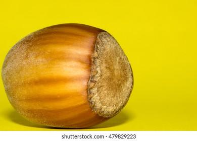 Fresh hazelnut on yellow background, close up.