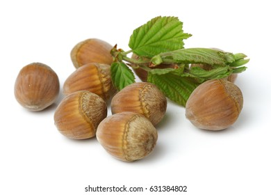 Fresh hazelnuts and leaves