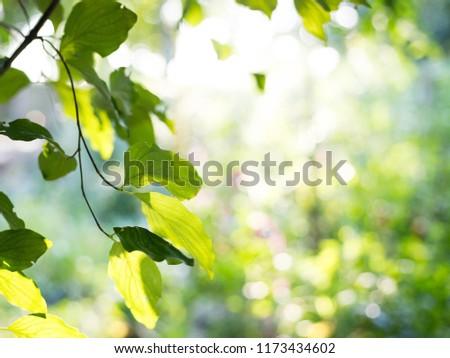 Mary leaf bio