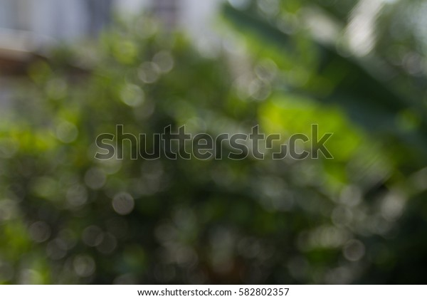 Fresh healthy green bio background with abstract blurred foliage and bright summer sunlight and a central