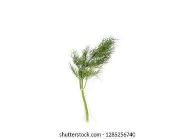 Fresh and healthy green dill on white background
