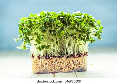 Fresh healthy seed sprouts, healthy and clean eating concept.