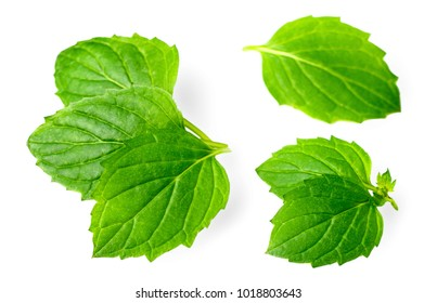 fresh herb, green peppermint isolated on white
