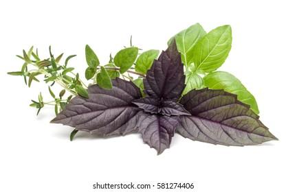 Fresh herb leaves variety isolated on white background. Purple dark opal basil, sweet basil, oregano, thyme