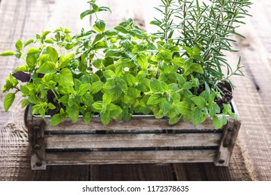 Fresh herb, mint, rosemary and basil in wooden box. Growing herbs from the garden.