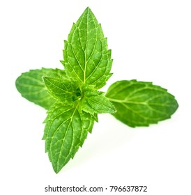 fresh herb, peppermint leaves isolated on white