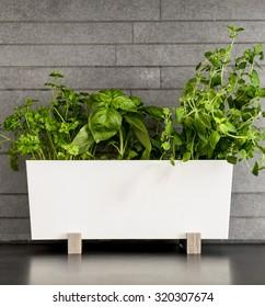 Fresh herbs in clean, modern kitchen