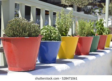 fresh herbs in colored pots and buckets