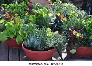 Kräuter, frisch, in kompakten Behältern für den Garten- oder Gartenbau angebaut