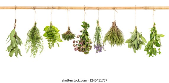 Fresh herbs hanging isolated on white background. Bundle of basil, sage, thyme, mint, bay laurel, marjoram, lavender