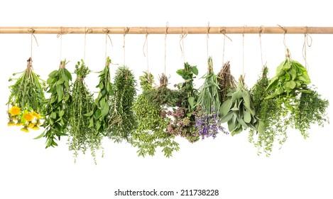 fresh herbs hanging isolated on white background. basil, rosemary, sage, thyme, mint, oregano, marjoram, savory, lavender, dandelion