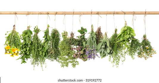 Fresh herbs hanging isolated on white background. Basil, rosemary, sage, thyme, mint, oregano, marjoram, savory, lavender, dandelion, chamomile
